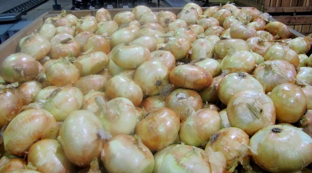onions in bin